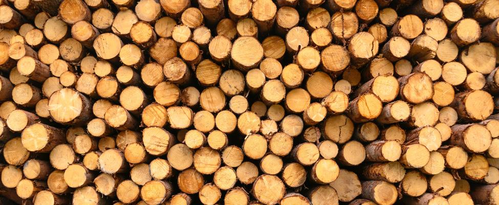 EUTR European Union Timber Regulation
